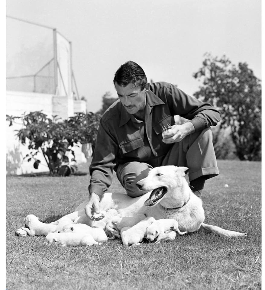 Gregory Peck helping Slip on Sept. 29, 1949 .......