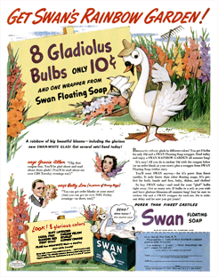 The 1943 Gladiolus bulb promotion consisted of eight Gladiolus bulbs, unaccountably dropping the Gracie Allen variety but including a new 'Swan-White' variety.