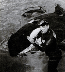 Hugh Downs here seen with a killer whale while the host of the Today show circa 1967